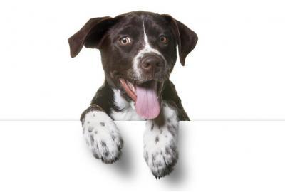 飼い犬の足について知っておくべき3つのこと